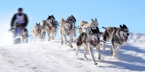 trineo huskies Laponia