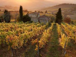 viñedos la Toscana